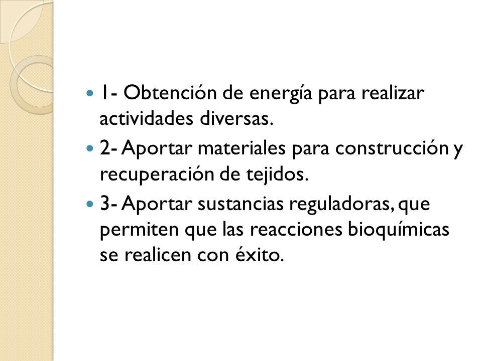 1- Obtención de energía para realizar actividades diversas.