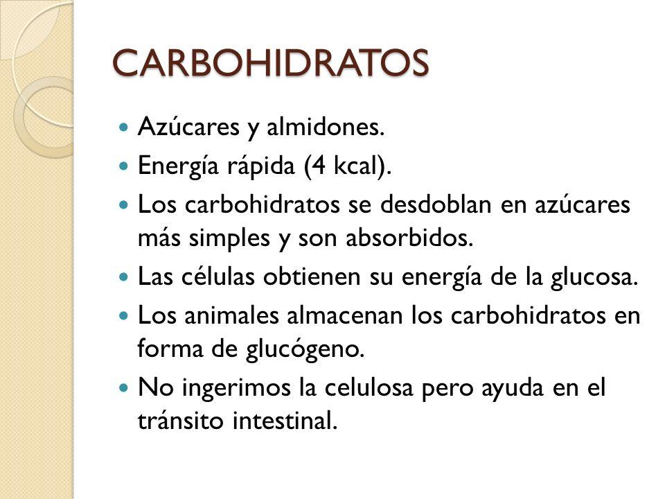 CARBOHIDRATOS Azúcares y almidones. Energía rápida (4 kcal).
