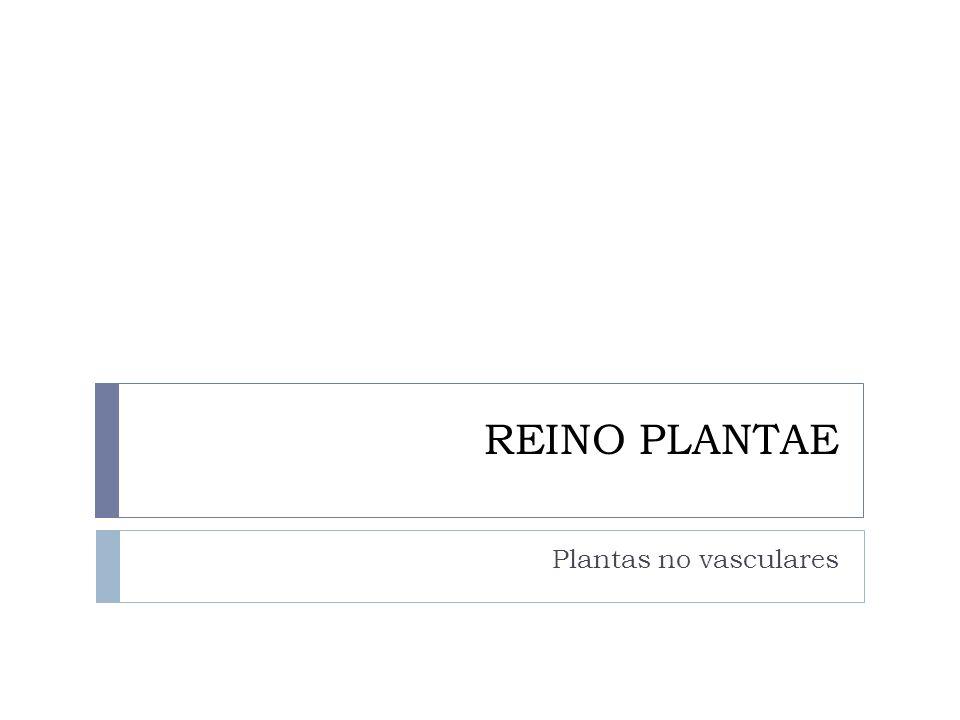 REINO PLANTAE Plantas no vasculares