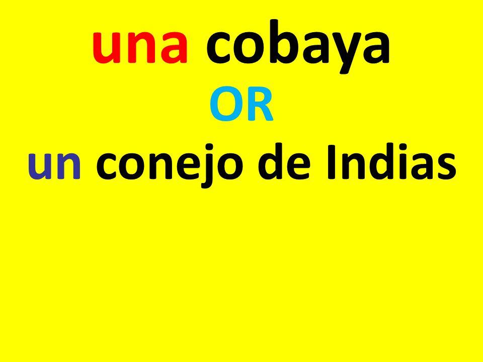 una cobaya OR un conejo de Indias