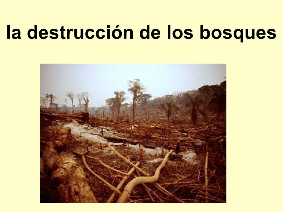 la destrucción de los bosques