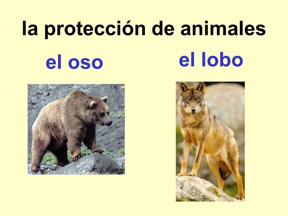 la protección de animales