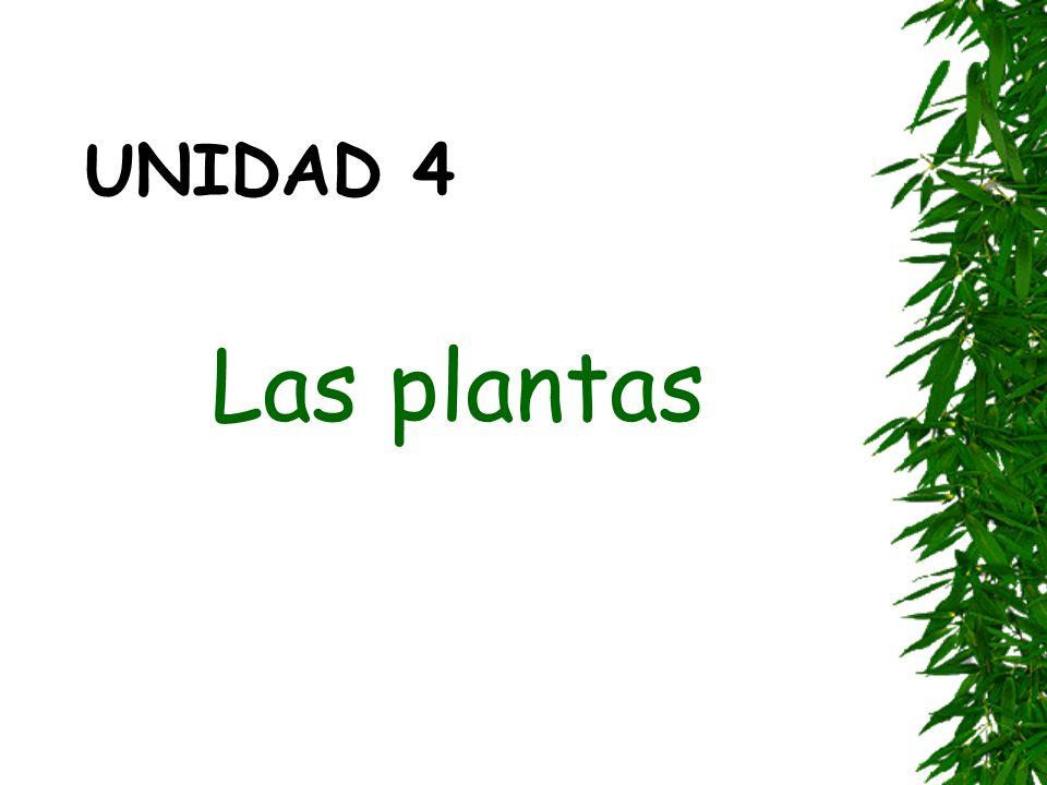 UNIDAD 4 Las plantas