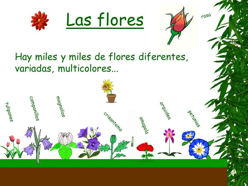 Las floresrosa. Hay miles y miles de flores diferentes, variadas, multicolores... campanillas. magnolias.