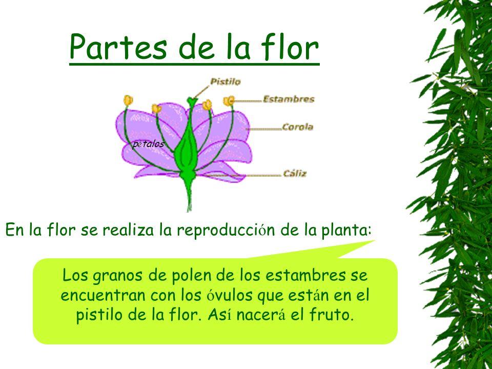 Partes de la flor En la flor se realiza la reproducción de la planta: