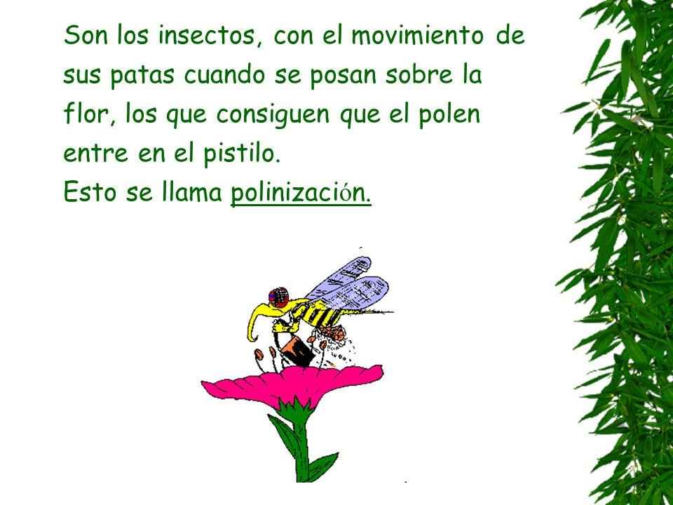 Son los insectos, con el movimiento de