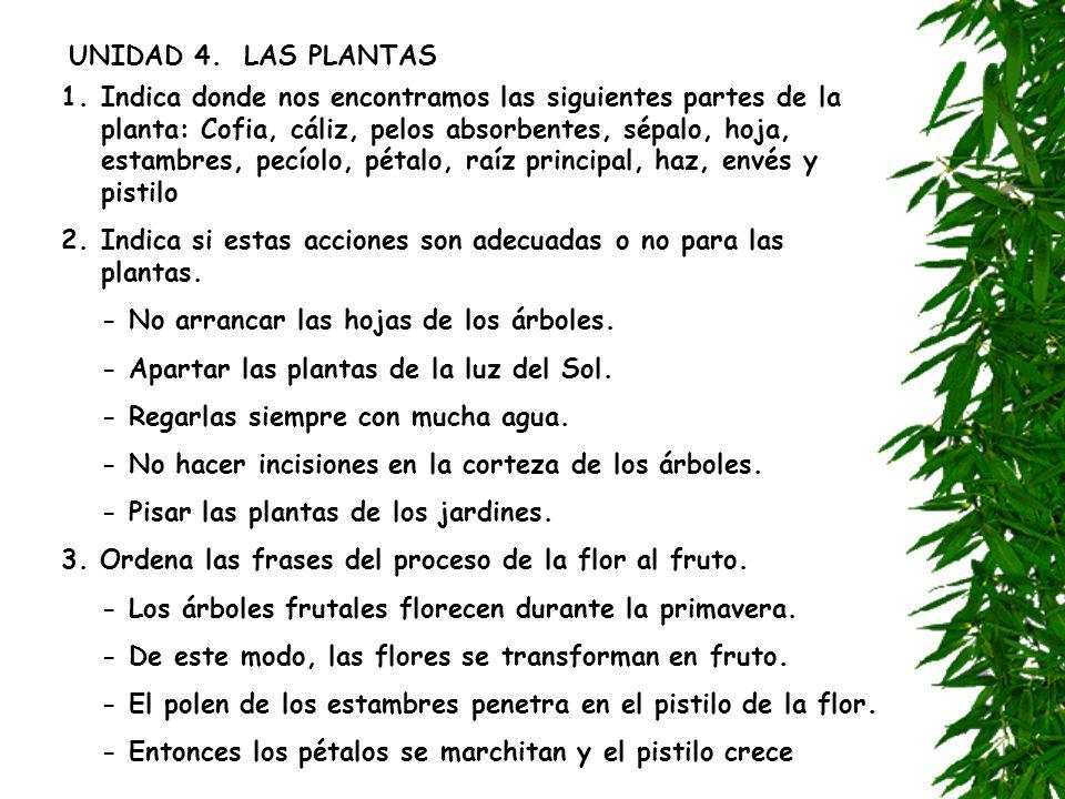 UNIDAD 4. LAS PLANTAS