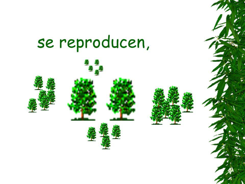 se reproducen,