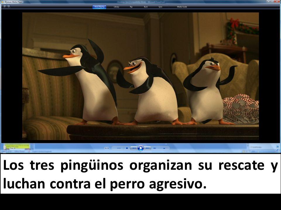 Los tres pingüinos organizan su rescate y luchan contra el perro agresivo.