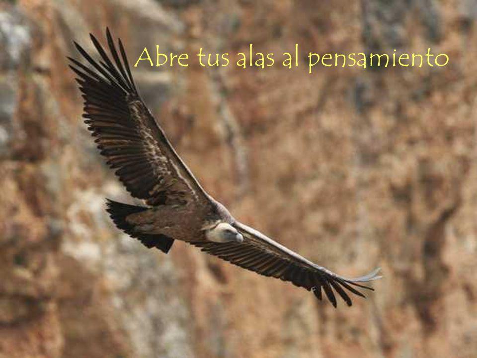 Abre tus alas al pensamiento