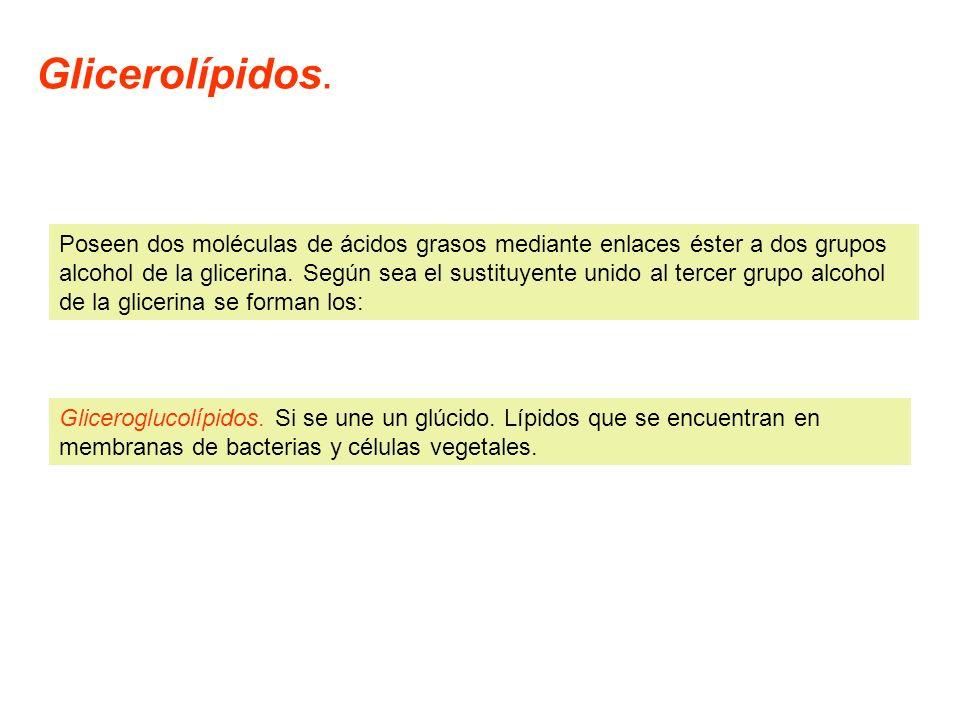 Glicerolípidos.