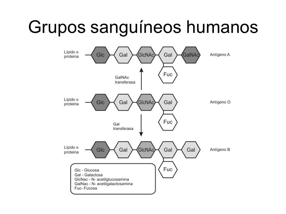 Grupos sanguíneos humanos