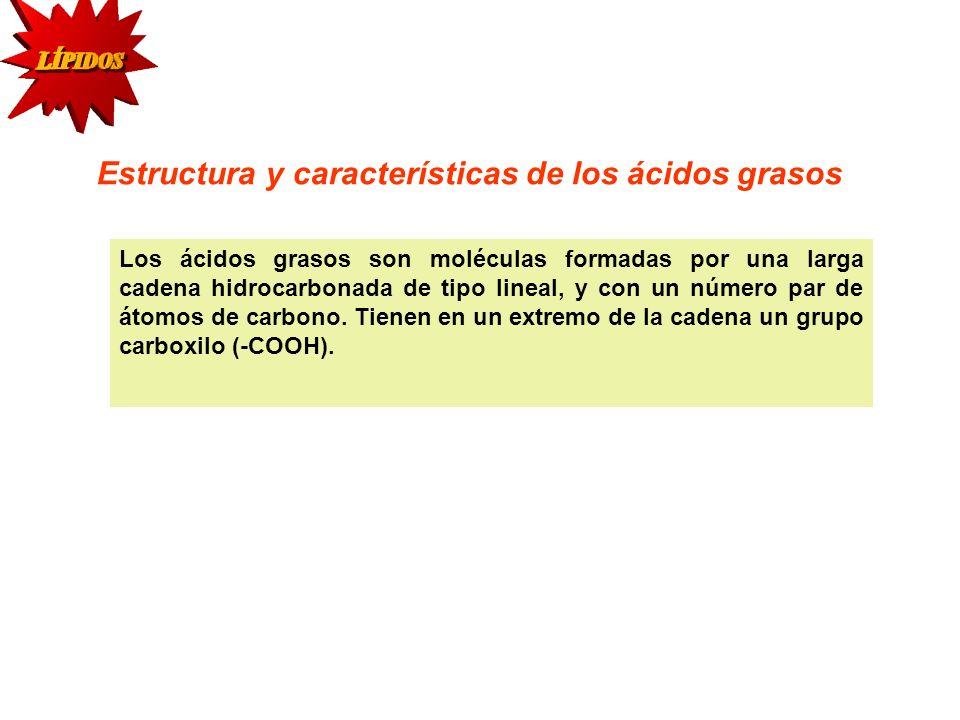 Estructura y características de los ácidos grasos