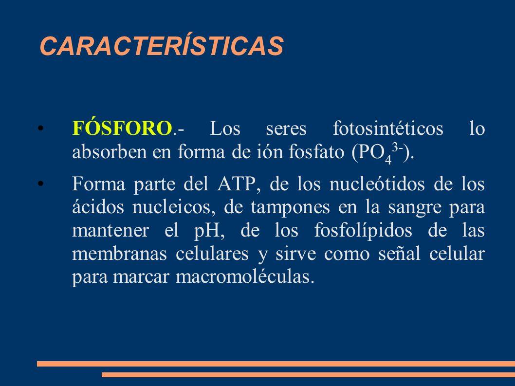 CARACTERÍSTICASFÓSFORO.- Los seres fotosintéticos lo absorben en forma de ión fosfato (PO43-).