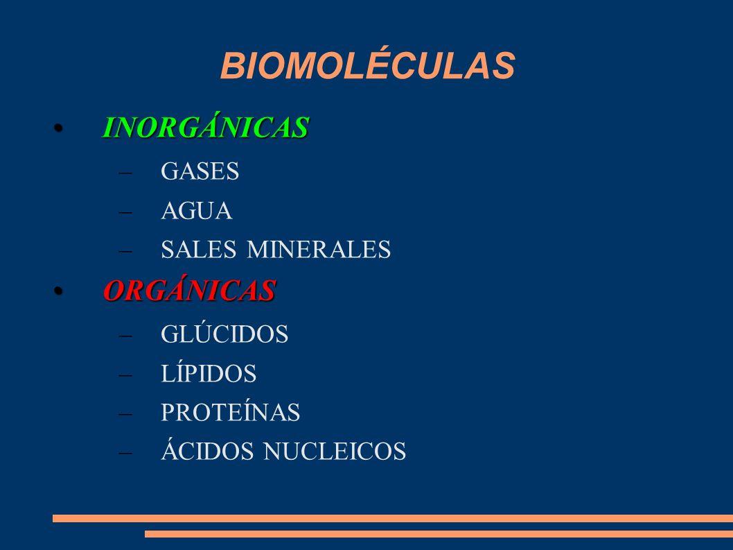 BIOMOLÉCULAS INORGÁNICAS ORGÁNICAS GASES AGUA SALES MINERALES GLÚCIDOS