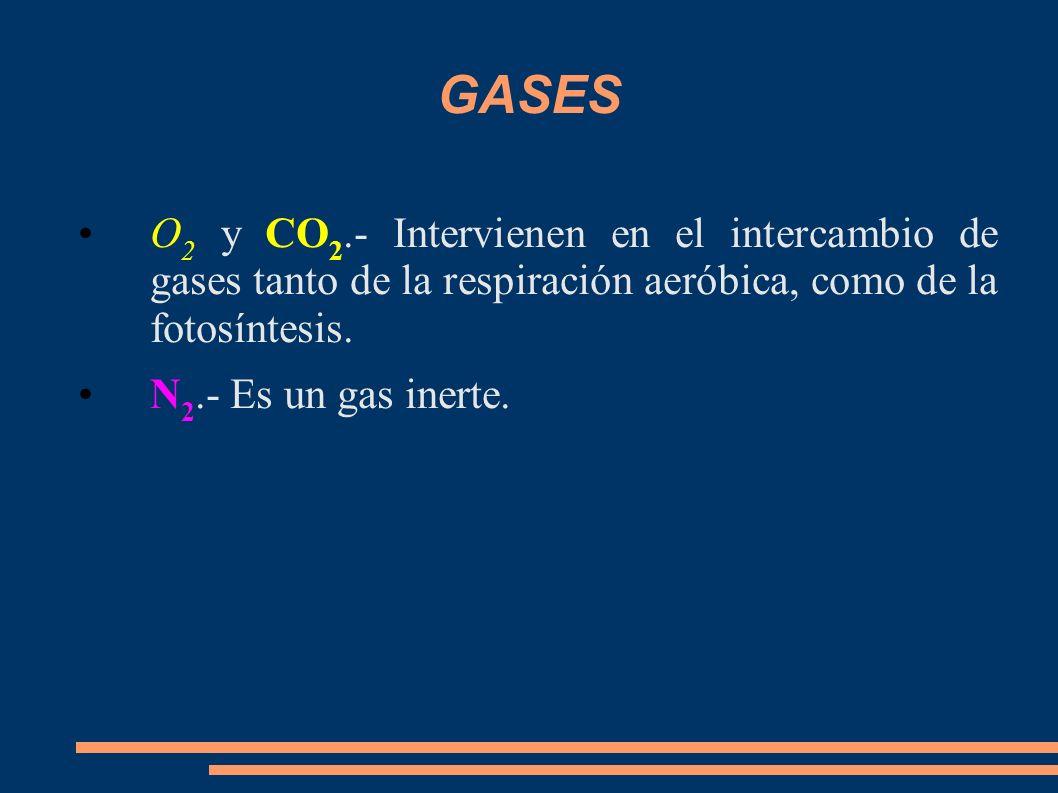 GASES O2 y CO2.- Intervienen en el intercambio de gases tanto de la respiración aeróbica, como de la fotosíntesis.