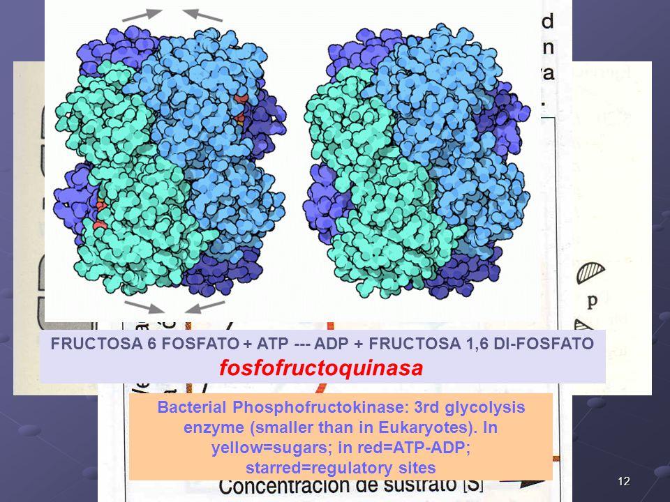 FRUCTOSA 6 FOSFATO + ATP --- ADP + FRUCTOSA 1,6 DI-FOSFATO