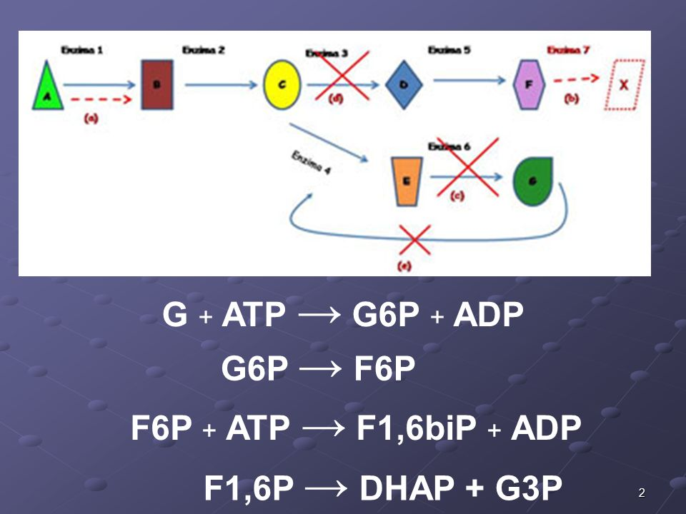 G + ATP → G6P + ADP G6P → F6P F6P + ATP → F1,6biP + ADP F1,6P → DHAP + G3P