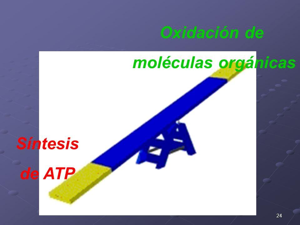 Oxidación de moléculas orgánicas Síntesis de ATP