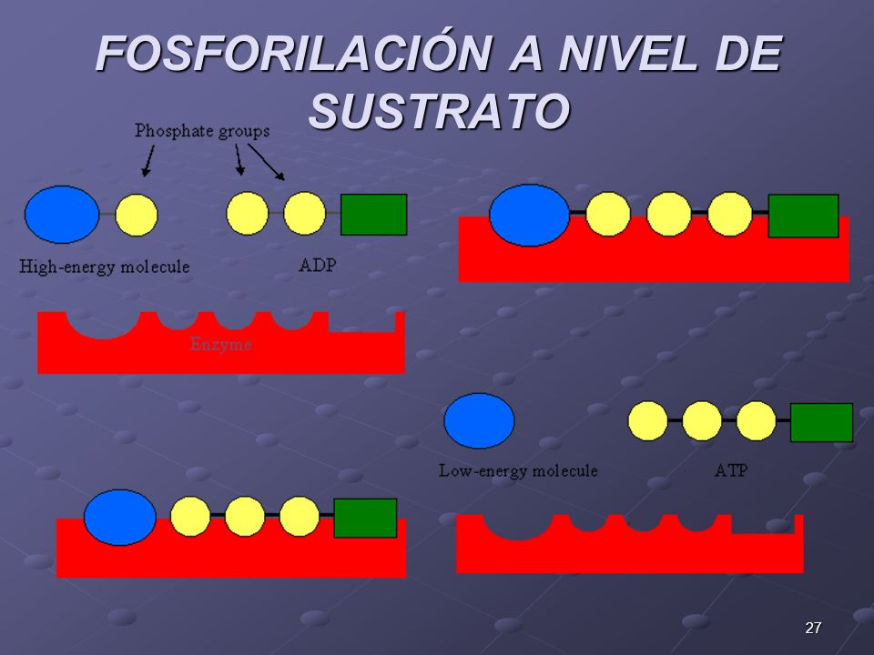 FOSFORILACIÓN A NIVEL DE SUSTRATO