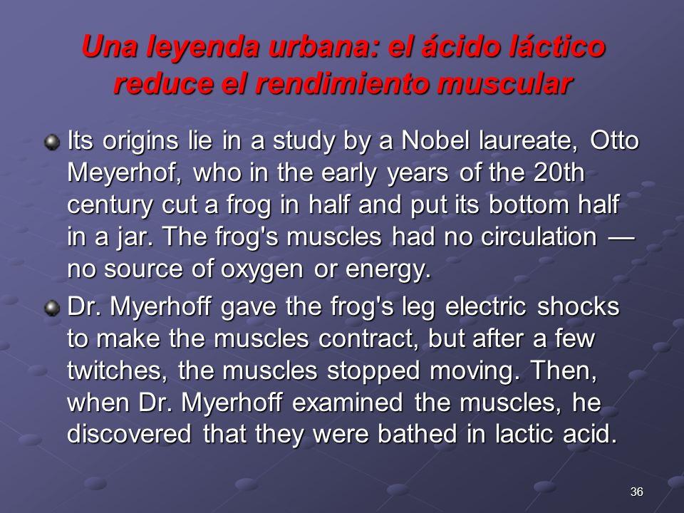 Una leyenda urbana: el ácido láctico reduce el rendimiento muscular