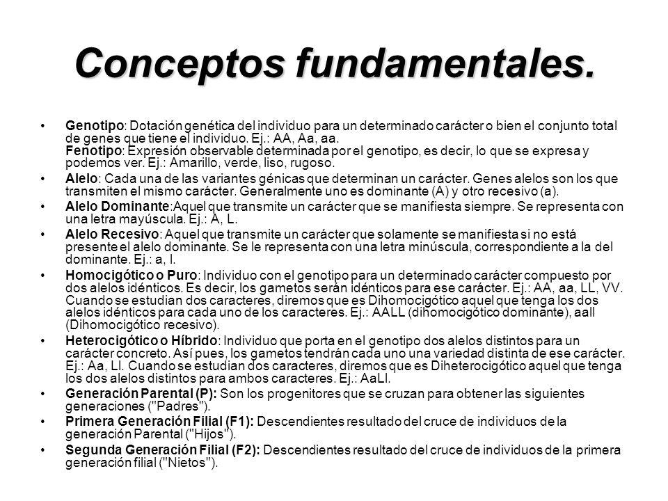 Conceptos fundamentales.