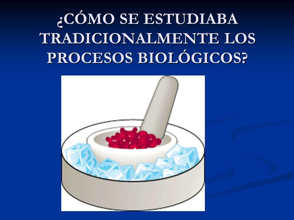 ¿CÓMO SE ESTUDIABA TRADICIONALMENTE LOS PROCESOS BIOLÓGICOS