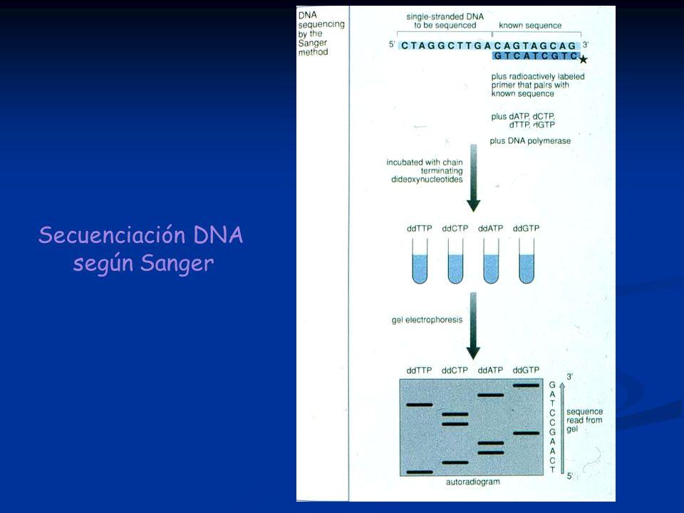 Secuenciación DNA según Sanger