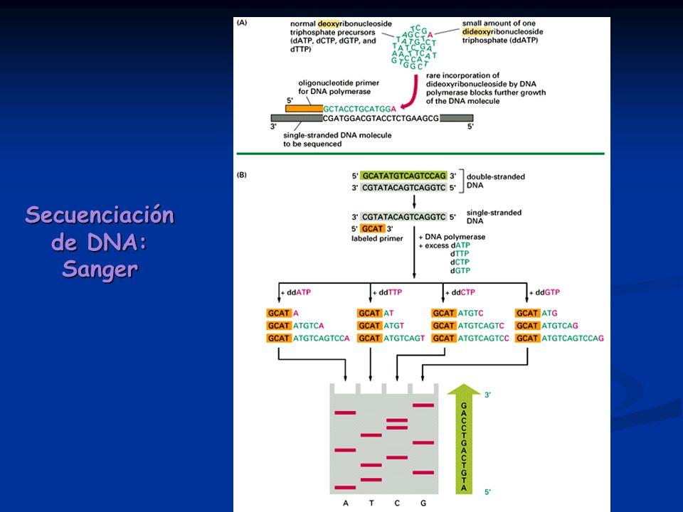 Secuenciación de DNA: Sanger