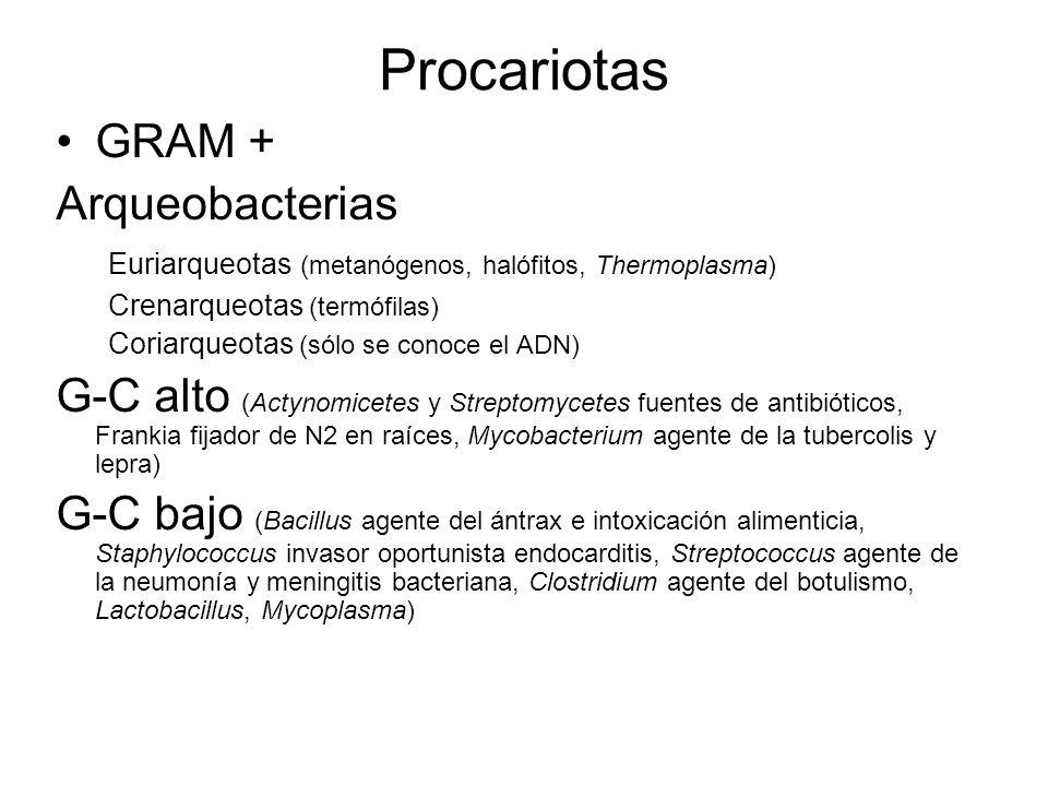 Procariotas GRAM + Arqueobacterias