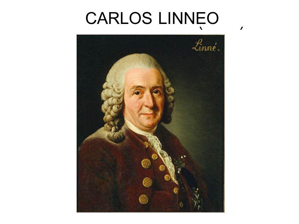 CARLOLUS LINNAEUS CARLOS LINNEO CARL VON LINNÉ (1707)