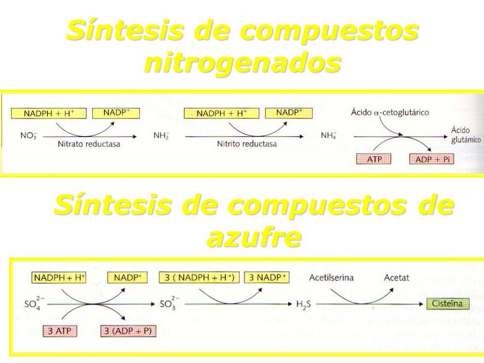Síntesis de compuestos nitrogenados