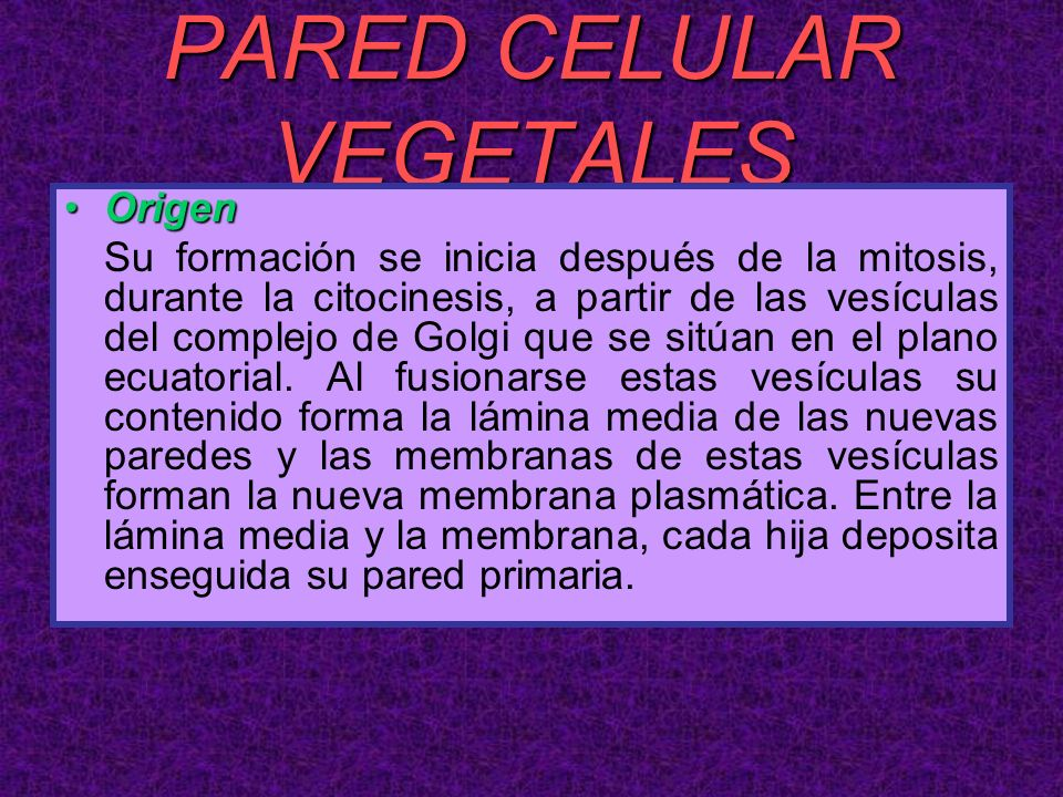 PARED CELULAR VEGETALES