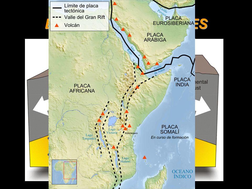 BORDES DIVERGENTES Vulcanismo: basaltos. Sismicidad: focos someros