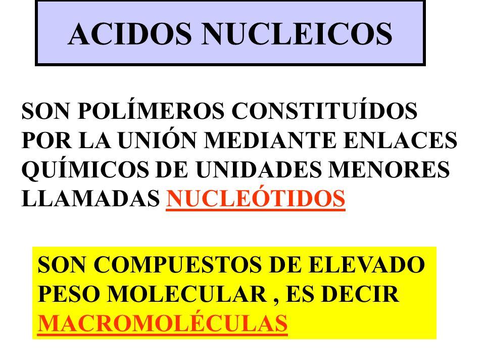 ACIDOS NUCLEICOSSON POLÍMEROS CONSTITUÍDOS POR LA UNIÓN MEDIANTE ENLACES QUÍMICOS DE UNIDADES MENORES LLAMADAS NUCLEÓTIDOS.