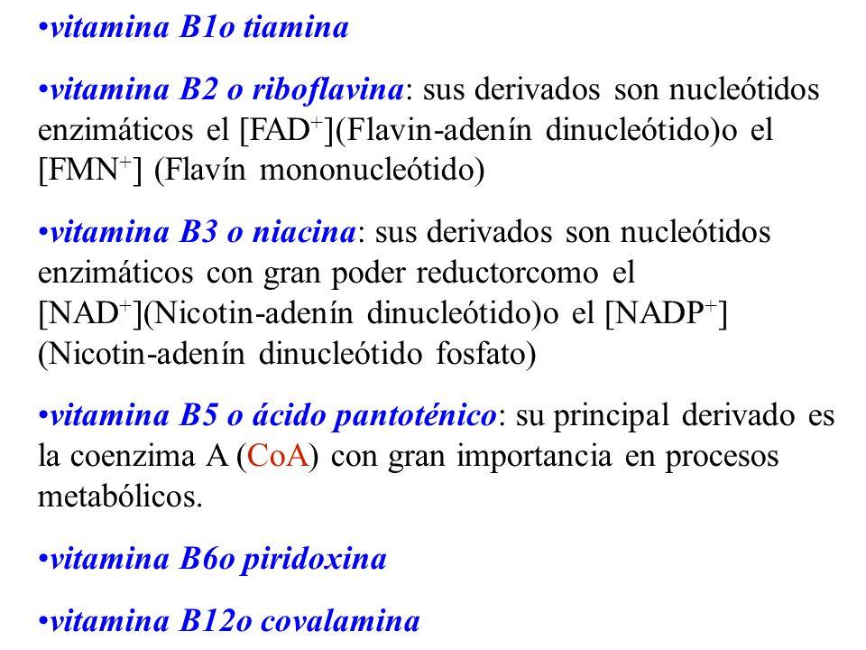 vitamina B1o tiamina