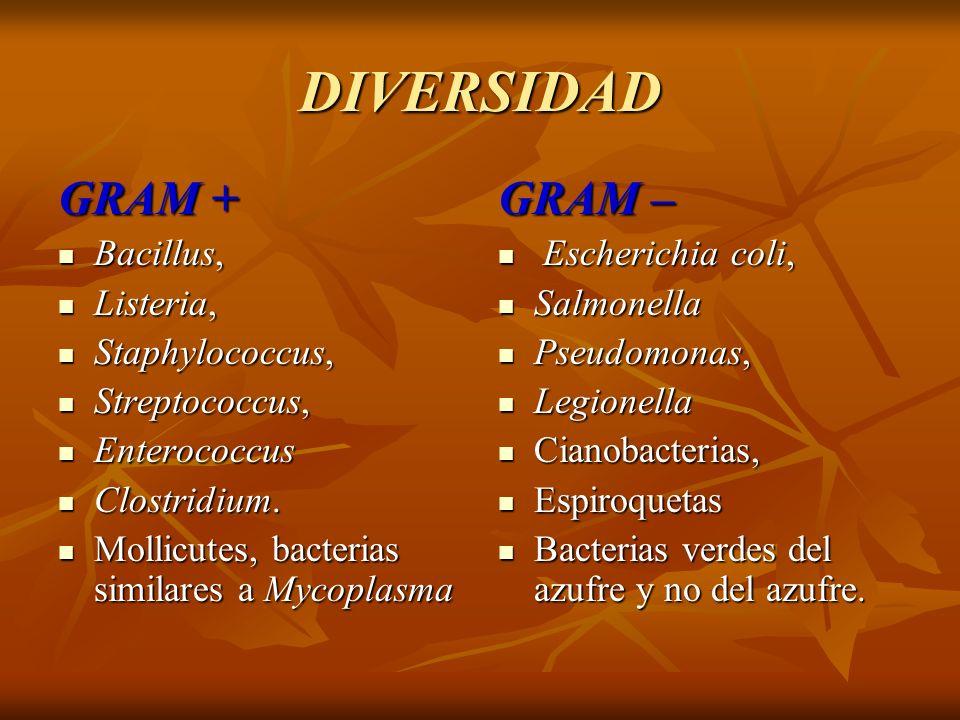 DIVERSIDAD GRAM + GRAM – Bacillus, Listeria, Staphylococcus,