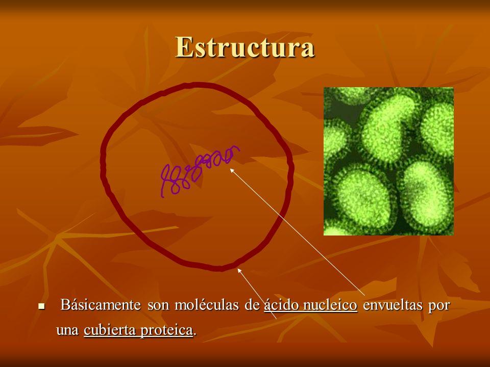 Estructura Básicamente son moléculas de ácido nucleico envueltas por una cubierta proteica.