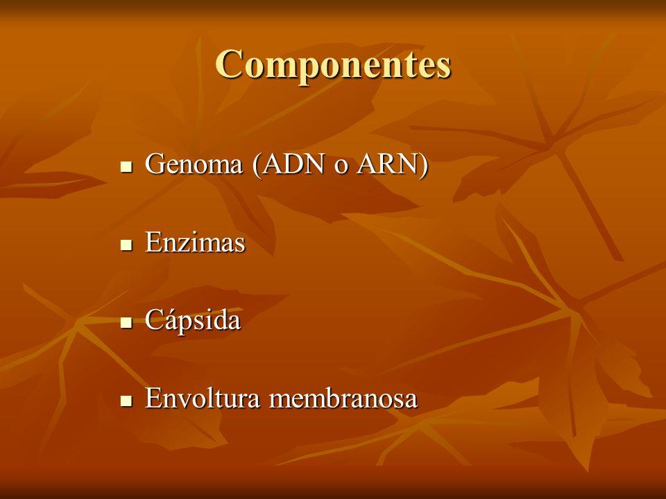 Componentes Genoma (ADN o ARN) Enzimas Cápsida Envoltura membranosa