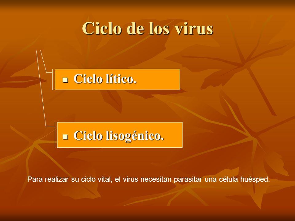 Ciclo de los virus Ciclo lítico. Ciclo lisogénico.
