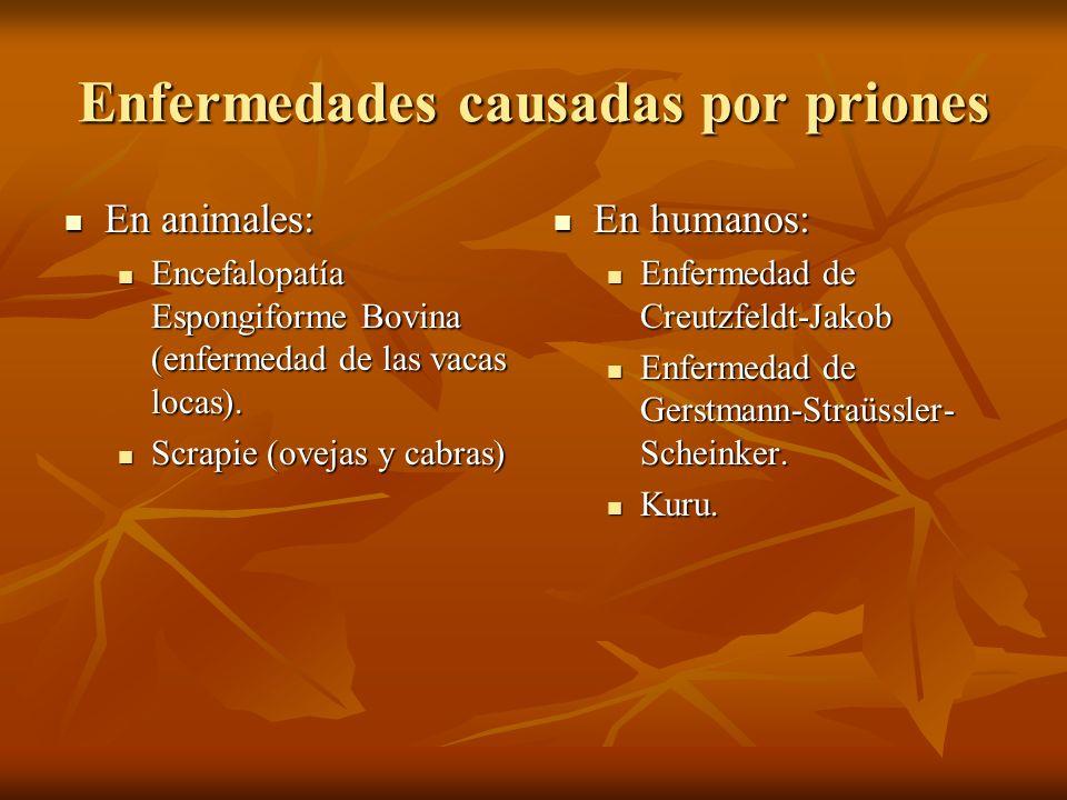 Enfermedades causadas por priones
