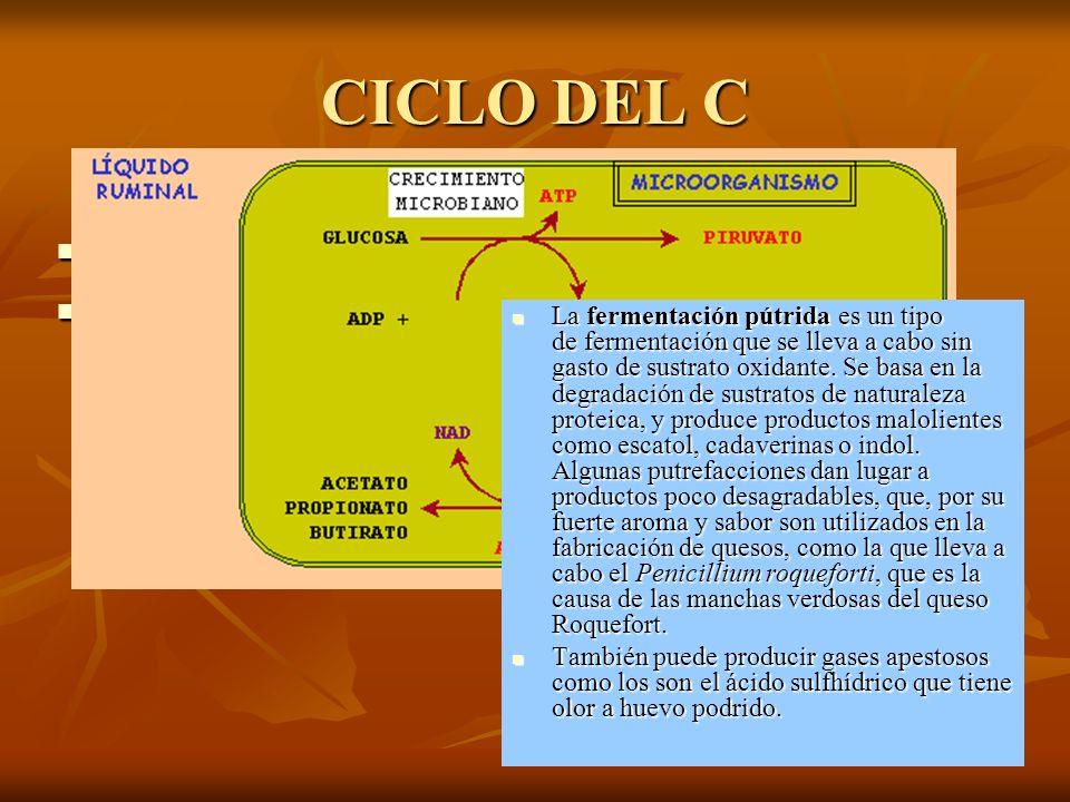 CICLO DEL C ¿Qué organismos fijan el CO2