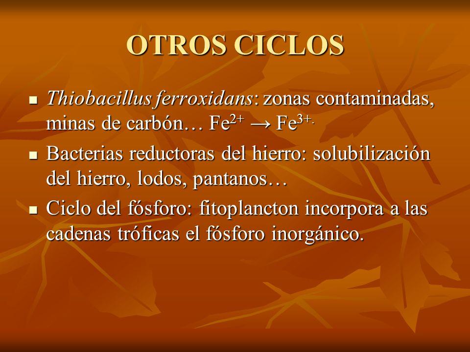 OTROS CICLOS Thiobacillus ferroxidans: zonas contaminadas, minas de carbón… Fe2+ → Fe3+.