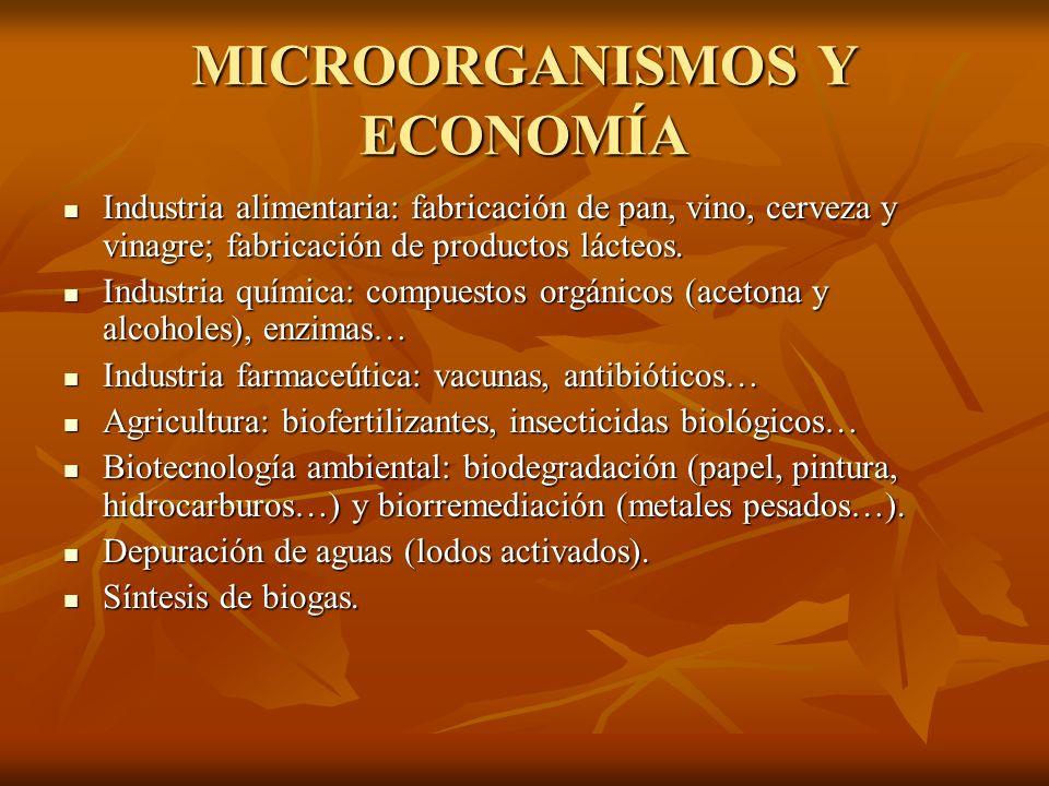 MICROORGANISMOS Y ECONOMÍA