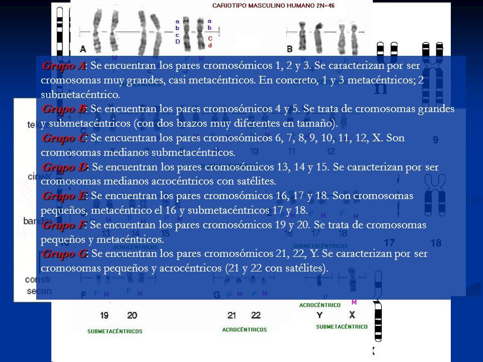 Estructura y composición de los cromosomas