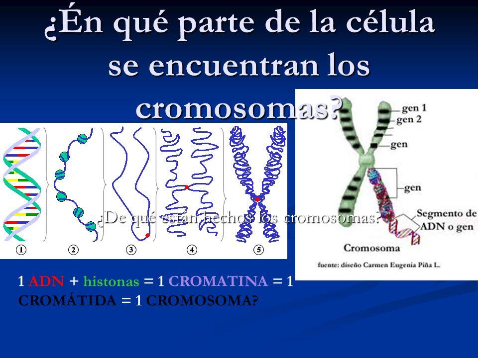 ¿Én qué parte de la célula se encuentran los cromosomas
