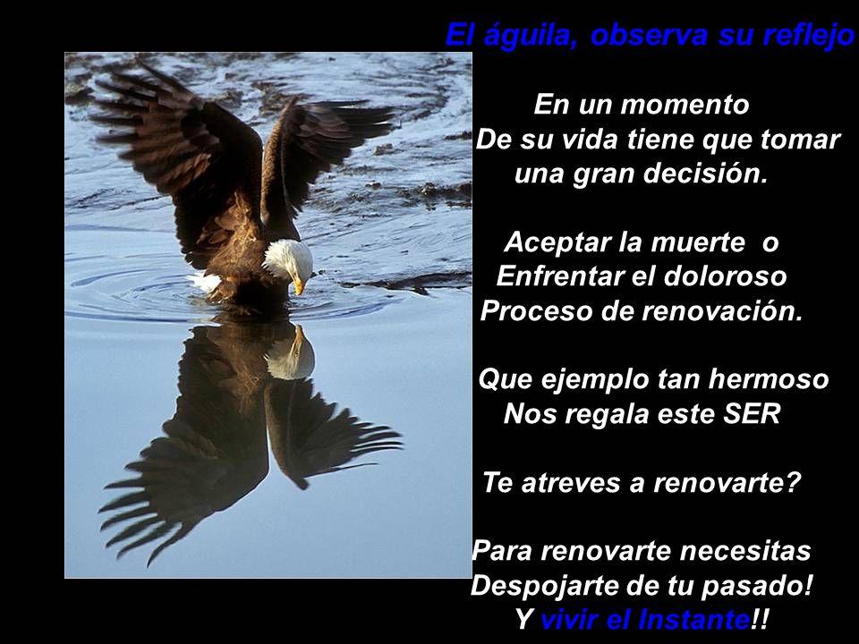 El águila, observa su reflejo