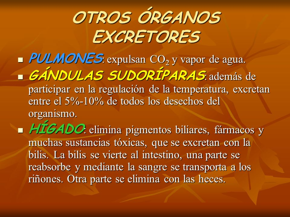 OTROS ÓRGANOS EXCRETORES