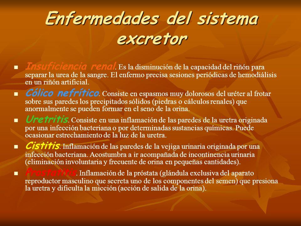 Enfermedades del sistema excretor
