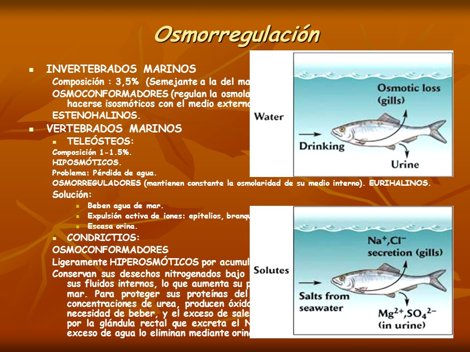 Osmorregulación INVERTEBRADOS MARINOS VERTEBRADOS MARINOS